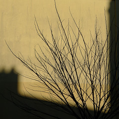 Urban nature 32 (w.eras) Tags: urban nature wall light shadows tree branches lines p1110839 yellow