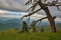 (mevans4272) Tags: mountains grass tree sky clouds