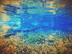 July Spring (J. Parker Natural Florida Photographer) Tags: underwater water swimming gopro goprohero3silver ginniesprings julyspring spring santeferiver color colorful geology vsco vscocam nature naturalbeauty waterscape highsprings fortwhite florida