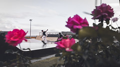 Skating between roses (aleflorea.photography) Tags: red madeira funchal holiday island portugal flower flowers colour color colors sport xtreme extreme trick tricks skate skateboarding park