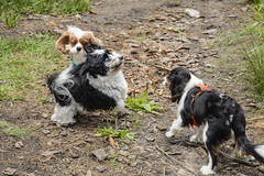 Toby and two small dogs (pacgrove) Tags: dog