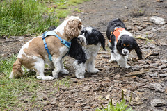 Toby and two small dogs (pacgrove) Tags: