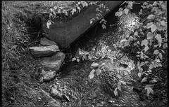 rippled water, creek, overhanging branches, stone, concrete, Biltmore Esate, Asheville, NC, Voigtlander Vitomatic II, Derev Pan 400, HC-110 developer, 5.25.19 (steve aimone) Tags: water ripples creek overhangingbranches stones concrete biltmore biltmoreestate asheville northcarolina voigtlander voigtlandervitomaticii vitomatic derevpan400 hc110developer 35mm 35mmfilm film monochrome monochromatic blackandwhite landscape