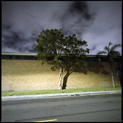 Industrial trees (ADMurr) Tags: la eastside industrial tree night hasselblad zeiss fuji pro 400 dba802 swc 38mm