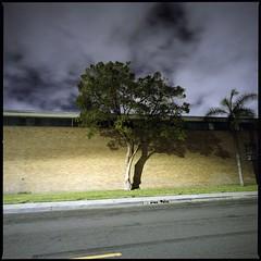 Industrial trees (ADMurr) Tags: la eastside industrial tree night hasselblad zeiss fuji pro 400 dba802 swc 38mm