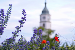 Kalemegdan Sahat Tower (Marija Mimica busy!!!) Tags: old colors flower bokeh belgrade building city friends