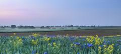 blaue Stunde in der Vorderpfalz (Pfalzknipser) Tags: blauestunde gäu landschaft lichtstimmung