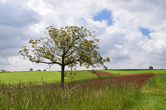 Au gré des champs (Croc'odile67) Tags: nikon d3300 sigma contemporary 18200dcoshsmc paysage landscape campagne champ cloud ciel sky nature nuage arbres trees prairie
