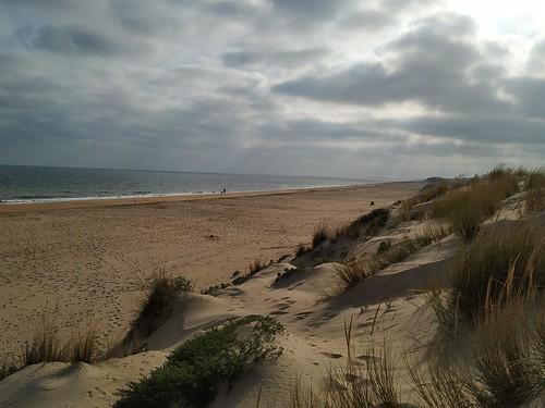 Dunas de la playa de La Antilla. Lepe (Huelva).