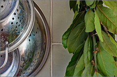 Kitchen scenes 2 (alanhitchcock49) Tags: kitchen home corner redditch worcestershire spider plant oxalis triangularis chlorophytum comosum bay leaves