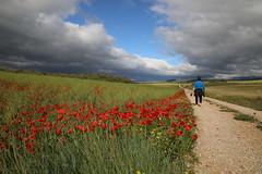 Walking under the blue line... (Nora077) Tags: navarra spain landscape pisaje nature nora toth