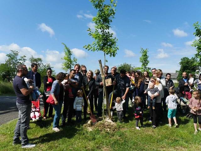 Opération « une naissance, un arbre » 2019