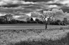 Wales countryside (akatsoulis) Tags: welshflickrcymru wales pentremeyrick nikon nikonuk 500px apsc nikoneurope nikkor 50mm landscape monocrome blackandwhite d5300 southwales valeofglamorgan blackandwhitephotography