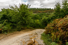 HELECHOS, PINOS, CARBALLOS, ... (bacasr) Tags: camino hicking viajando bosque cloudy caminoportugués way travelling trees caminando path spain sendero galicia forest nature trail naturaleza caminodesantiago nuboso árboles españa thewayofsaintjames