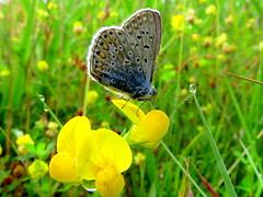 IMG_0018x (gzammarchi) Tags: italia paesaggio natura pianura campagna ravenna sanmarco farfalla