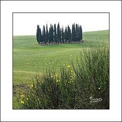 Maggio in Val d'Orcia (5) (Jambo Jambo) Tags: panorama landscape campagna countryside valdorcia siena toscana tuscany italia italy sonydscrx10m4 jambojambo cipressi cypress ginestra broom sanquiricodorcia pienza montalcino