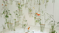 Come What May (devonpaul) Tags: individual stems british wild flowers test tubes hanging ceiling designed charlotte smithson chelsea