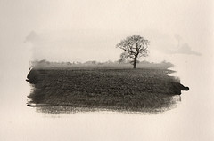 Tree (justin.syndercombe) Tags: film filmisnotdead darkroom ilford multigrade art300 tree