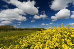 Yellow, Green, Blue and White (Johan Konz) Tags: springtime yellow rapeseed green field golfcourse tree blue sky white cloud landscape outdoor amsterdamnoord nikon d7500
