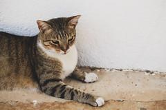 Lazy Lanzarote Cat (eskayfoto) Tags: canon eos 700d t5i rebel canon700d canoneos700d rebelt5i canonrebelt5i lightroom sk201902276471editlr sk201902276471 lanzarote cat playablanca rubiconmarina rubicon marina animal