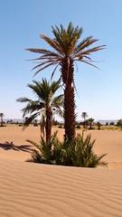 file6568 (François Chaumont) Tags: nature désert palmier