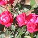 New spring flower bed