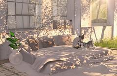 My favorite place for reading (Rose Sternberg) Tags: second life deco decor home garden tm creation love is floor sofá decors sf6 treschic tres chic trés très event pillow blanket puppie cat pot calla lilies rug pose scene dog
