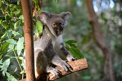 Australia (geraldineh.dutilly) Tags: 2014asiaaustralia