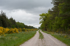 Along The Winding Road (Rind Photo) Tags: landscape landschaft trees skies denmark nikkor nikond700 rindphoto rindphotoflickr clauschristoffersen road walking green spring blossoming beautiful