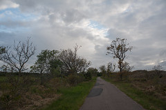 The Sleepwalker (Rind Photo) Tags: landscape landschaft trees skies denmark nikkor nikond700 rindphoto rindphotoflickr clauschristoffersen road walking green spring blossoming beautiful
