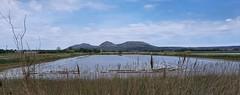Rice fields near Pals (Meino NL) Tags: rijstveld landschap landscape ricefieldsnearpals ricefield montgrí mountain costabrava spain spanje catalunya catalonië