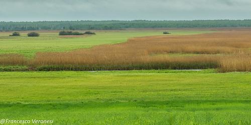 Marshes - Bierbza Marsh - Poland CD5A1732