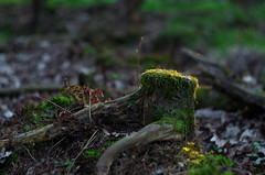 Untitled (Krystian38) Tags: tree trees light forest nature moss helios m42 swirly pentax k50 44m2 russian lens