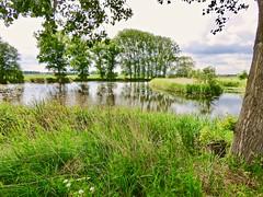 Elshoutse wielen . (Franc Le Blanc .) Tags: elshout wielen zeedijk nature trees reflections reed spring landscape