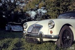 MGA Beetle (SKF-Media) Tags: classiccars classic cars automotiveportrait skfmedia