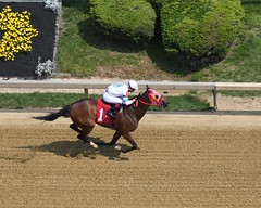 Preakness 2019 (StateMaryland) Tags: steven kwak horse race equine equestrian sports track bet betting tradition old yard central