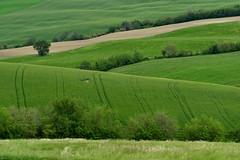 all green (luporosso) Tags: naturaleza nature nikon natura paesaggi paesaggio naturalmente nikond500 nikonitalia rossolupo verde green primavera spring italia campagna erba printemps marche scorcio campi scorci pajsage distesaerbosa