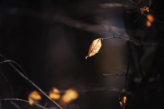 Lighten up (Pásztor András) Tags: forest light sun dark leaf yellow color sigma 70300mm d5100 dslr nikon andras pasztor photography nature full frame d700 hungary 2019