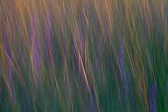 Coastal Grasses and Flowers at Sunset (Chris Skopec) Tags: