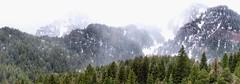 Between Again (Robert Cowlishaw (Mertonian)) Tags: spring2019 between rocky mountains rockymountains mertonian robertcowlishaw snow pines nature canonpowershotsx70hs photophari canon powershot sx70hs panoramic forbeauty