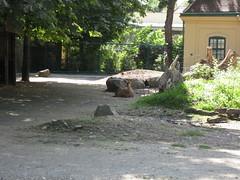 Nyala (✿ Esfira ✿) Tags: tiergartenschönbrunn viennazoo nyala antilope antelope wien vienna österreich austria