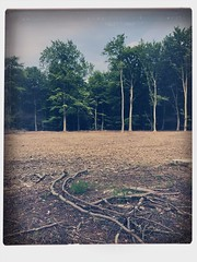 Triomf Van De Verschroeide Aarde... (LiesBaas) Tags: trees forest woods paradiselost lost sombre hipstamatic iphotography iphonography iphone triomfvandeverschroeideaardebyliesbaas
