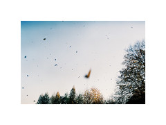 Leafs falling (kotmariusz) Tags: autumn sky falling leafs trees analog 35mm filmphotography exa1b helios m42 liście jesień drzewa kolor fujicoilor analogowa filmisnotdead polska