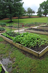 Community Garden, CC 5.23.19 (slcl events) Tags: garden communitygarden cliffcavebranch slcl outdoors plants stlouiscountylibrary stlouiscounty