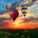 Pompey New York - Landscape - Sunflower Fields - US 20 - Onondaga County - Air Balloon thumbnail