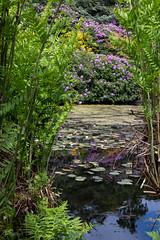 Gardens at Scotney Castle (ivanstevensphotography) Tags: nationaltrust moat manorhouse water reeds colour
