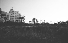 scenes from cyprus. 2. (Andrew.King) Tags: summer cyprus 2017 hotel backyard garden shrubs trees palm grass olympus om10 landscape film 35mm monochrome blackandwhite black white contrast