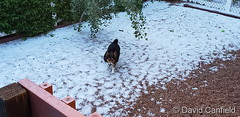 May 28, 2019 - A healthy dose of overnight hail in Broomfield. (David Canfield)