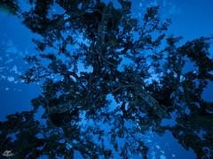 P5125110_LD_logo (Frodo DKL) Tags: lightpainting light painting lightart art pinturadeluz pintura de luz larga exposición largaexposicion longexposure longexposurephotography noctography children of darklight childrenofdarklight dkl frododkl frodoalvarez frodo lightpaintingparadise lpp lumipop olympus esolympus nubia ledlenser matteriacreativa nophotoshop camera rotation camerarotation camerarotationphotography forest trees árboles grimaldo meeting
