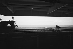 (heinrichj) Tags: trip travel europe denmark dänemark country countryside bw black white monochrome ricoh ricohgr ricohgr3 ricohgriii ricohimaging gr gr3 griii ferry roedby puttgarden fehmarn
